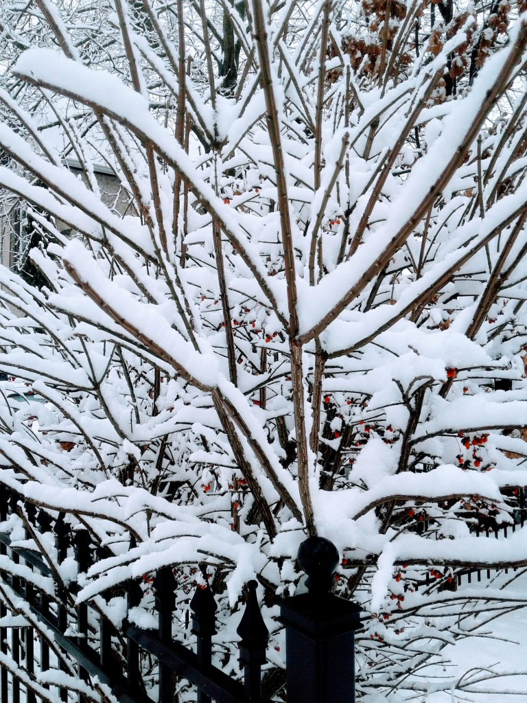 Snow on shrub branches