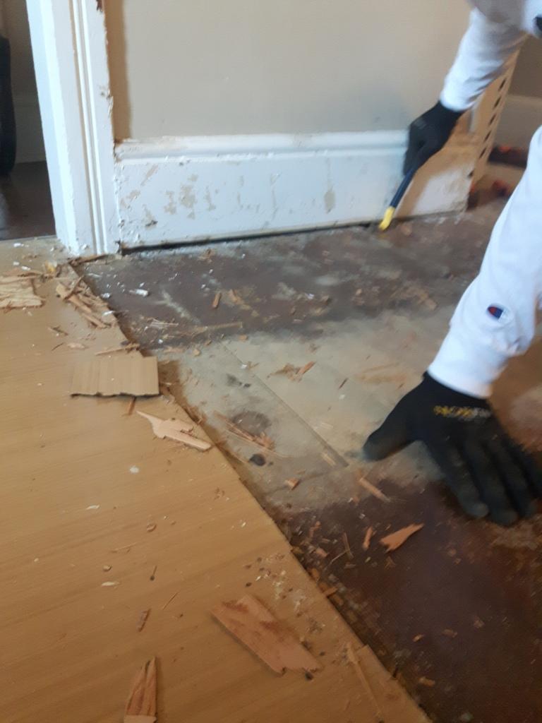 130 year old hardwood floor under carpet and vinyl flooring